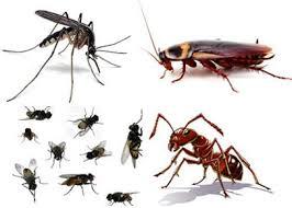 Giải quyết các vấn đề về côn trùng