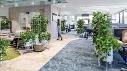 Không gian xanh cho văn phòng hiện đại